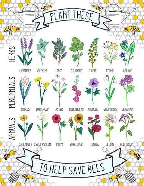 flowermedicine