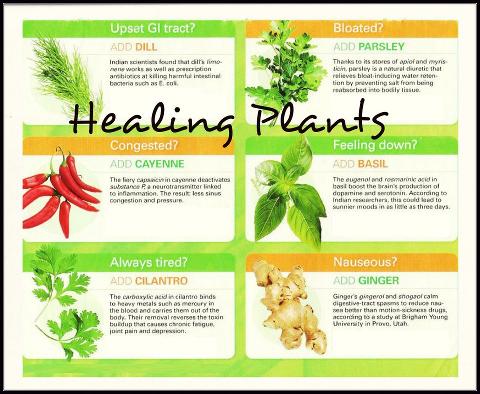 herbalsurvival